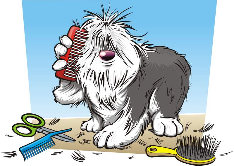 Mobile Dog Groomer In Sale Cheshire Trafford Manchester Dog